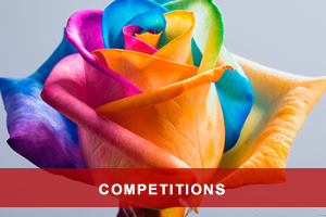 Rose Festival Competitions 2016